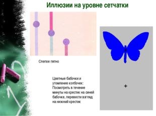 Иллюзии на уровне сетчатки Слепое пятно Цветные бабочки и утомление колбочек:
