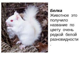 плюшевый Мишка друг мишка весёлый Петрушка зелёная петрушка
