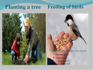 Planting a tree Feeding of birds