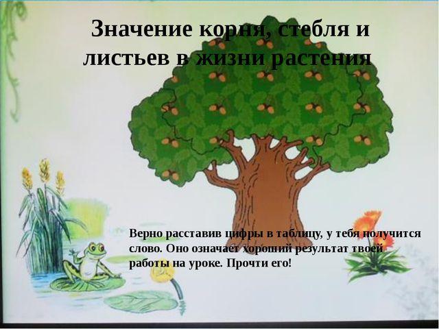 Значение корня, стебля и листьев в жизни растения Верно расставив цифры в таб...