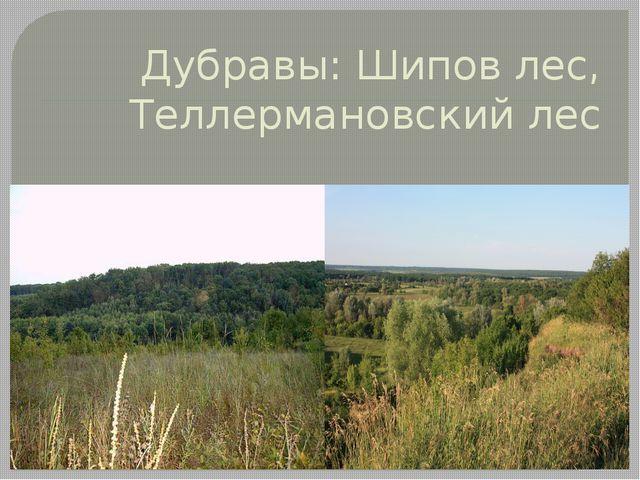 Дубравы: Шипов лес, Теллермановский лес