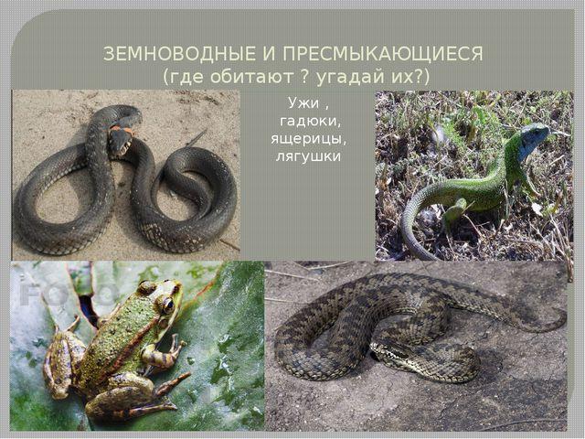 ЗЕМНОВОДНЫЕ И ПРЕСМЫКАЮЩИЕСЯ (где обитают ? угадай их?) Ужи , гадюки, ящерицы...