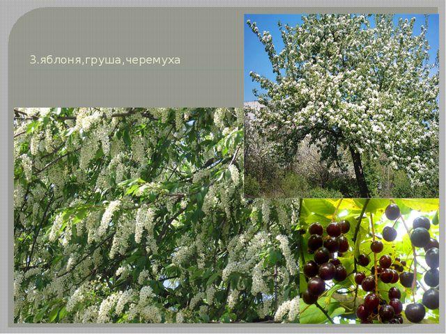 3.яблоня,груша,черемуха