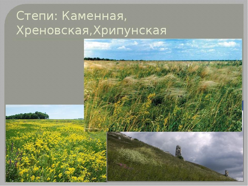 Степи: Каменная, Хреновская,Хрипунская