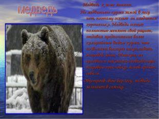 Медведь к зиме линяет. Но медвежьего корма зимой в лесу нет, поэтому осенью