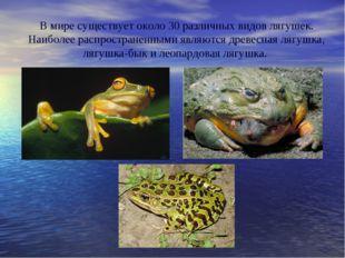 В мире существует около 30 различных видов лягушек. Наиболее распространенным