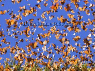 Перелётные бабочки