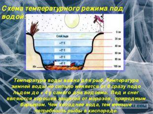 Схема температурного режима под водой: Температура воды важна для рыб. Темпер