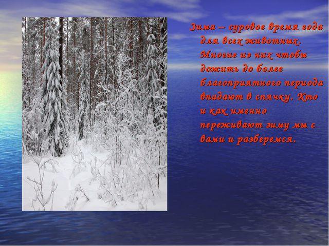 Зима – суровое время года для всех животных. Многие из них чтобы дожить до б...