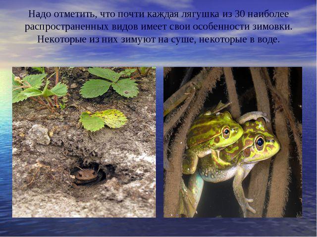 Надо отметить, что почти каждая лягушка из 30 наиболее распространенных видов...