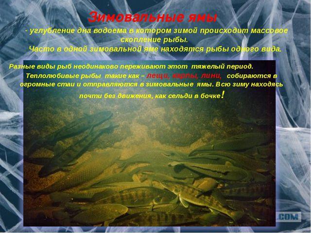 Зимовальные ямы Разные виды рыб неодинаково переживают этот тяжелый период. Т...