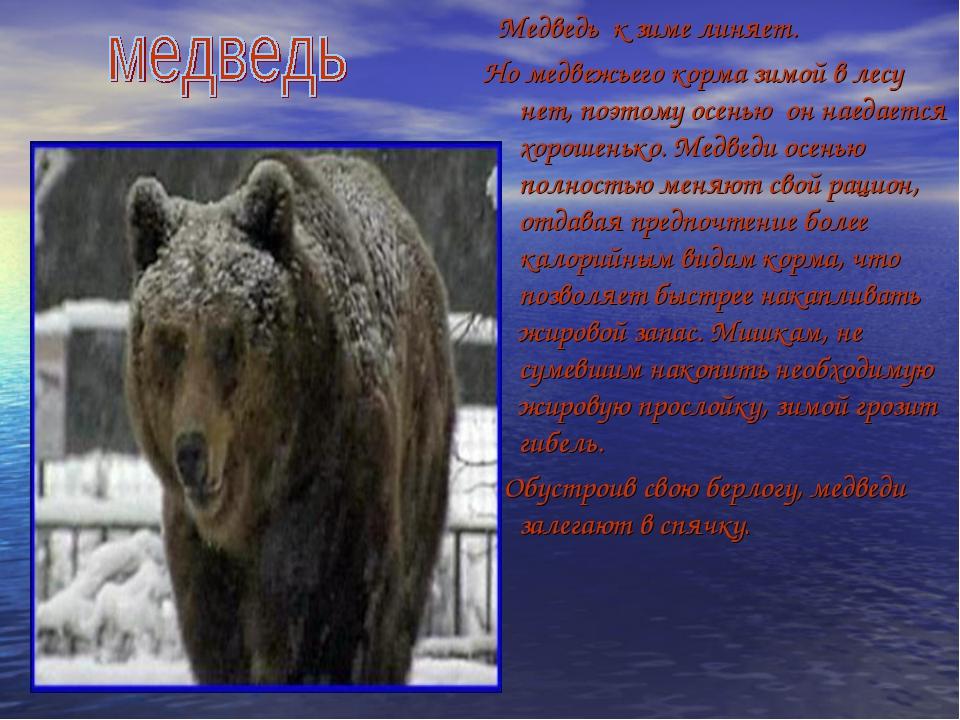 Медведь к зиме линяет. Но медвежьего корма зимой в лесу нет, поэтому осенью...