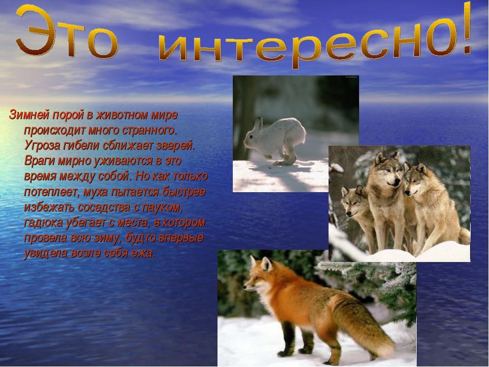 Зимней порой в животном мире происходит много странного. Угроза гибели сближ...