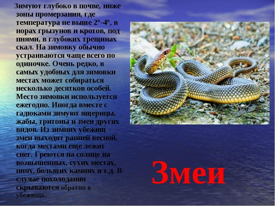 Змеи Зимуют глубоко в почве, ниже зоны промерзания, где температура не выше...