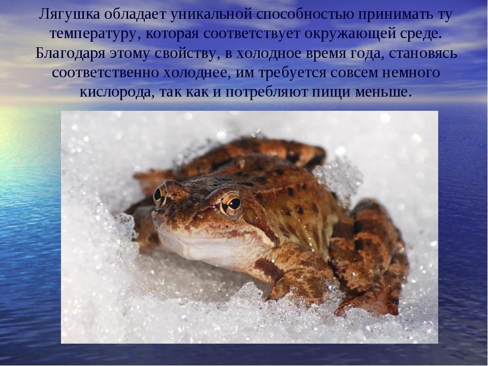 Лягушка обладает уникальной способностью принимать ту температуру, которая со...