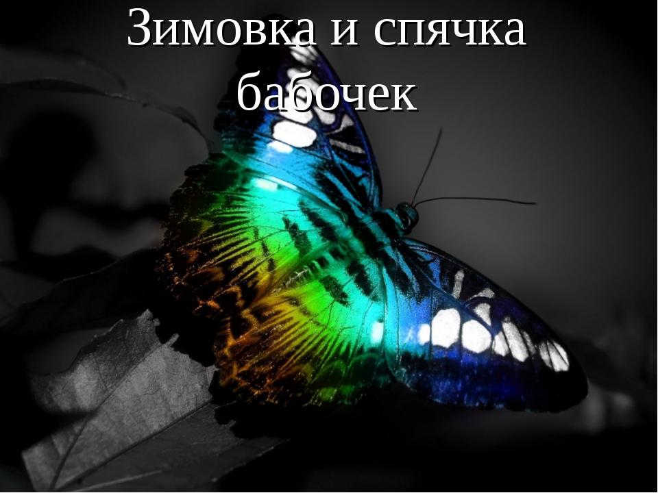 Зимовка и спячка бабочек