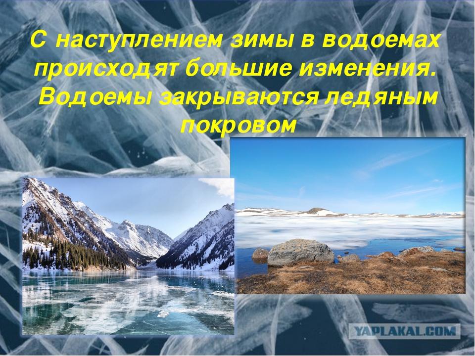 С наступлением зимы в водоемах происходят большие изменения. Водоемы закрываю...