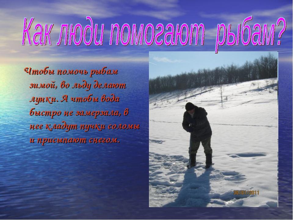Чтобы помочь рыбам зимой, во льду делают лунки. А чтобы вода быстро не замер...