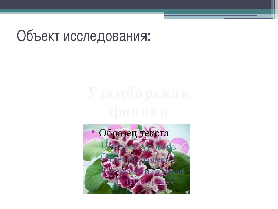 Объект исследования: Узамбарская фиалка