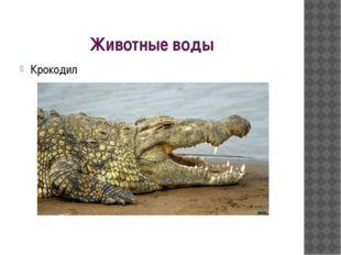 Животные воды Крокодил