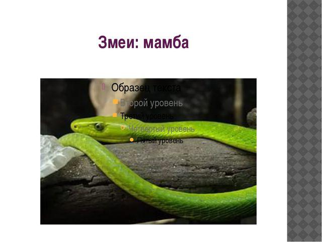 Змеи: мамба