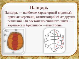 Панцирь Панцирь— наиболее характерный видимый признак черепахи, отличающий е