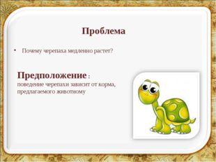 Проблема Почему черепаха медленно растет? Предположение : поведение черепахи