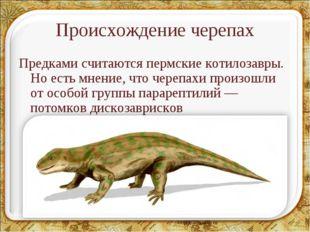Происхождение черепах Предками считаются пермские котилозавры. Но есть мнение