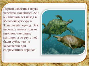 Первая известная науке черепаха появилась 220 миллионов лет назад в Мезозойск