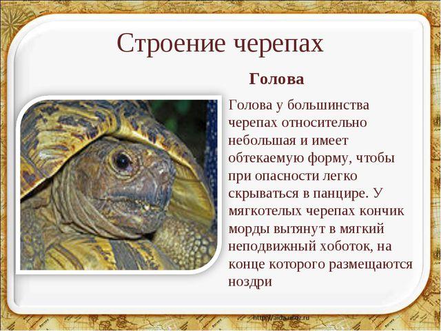 Строение черепах Голова у большинства черепах относительно небольшая и имеет...