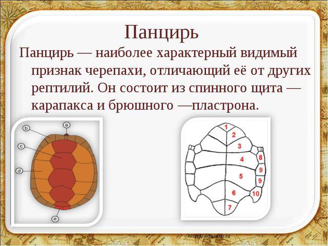 Панцирь Панцирь— наиболее характерный видимый признак черепахи, отличающий е...