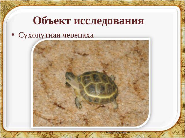 Объект исследования Сухопутная черепаха
