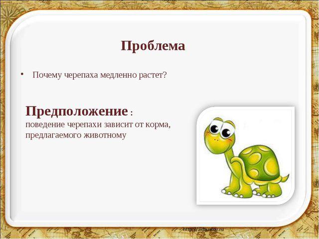 Проблема Почему черепаха медленно растет? Предположение : поведение черепахи...