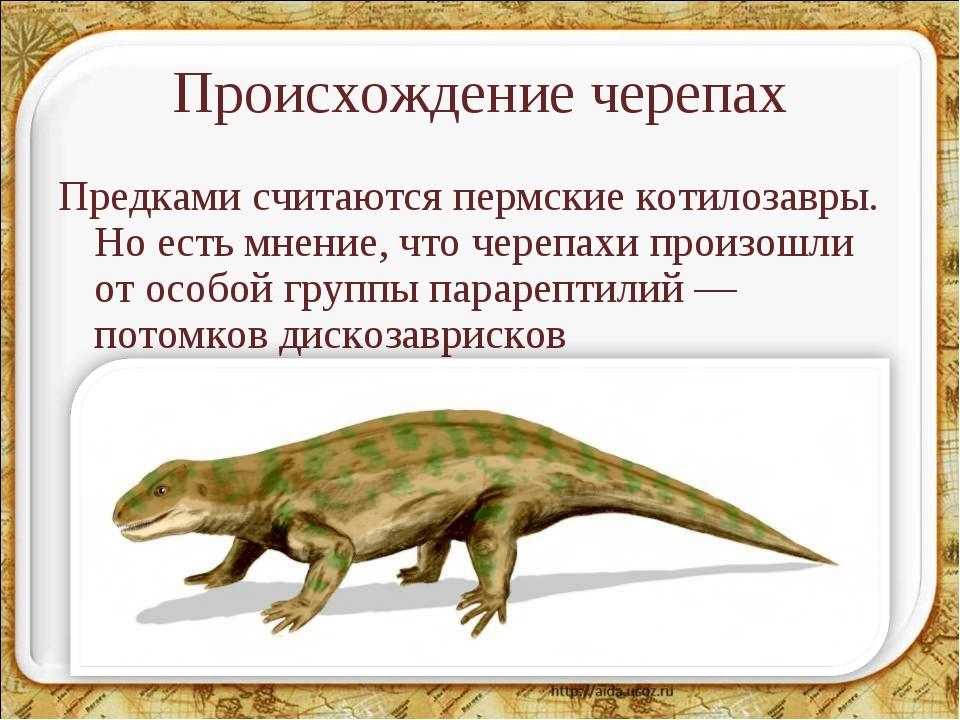 Происхождение черепах Предками считаются пермские котилозавры. Но есть мнение...