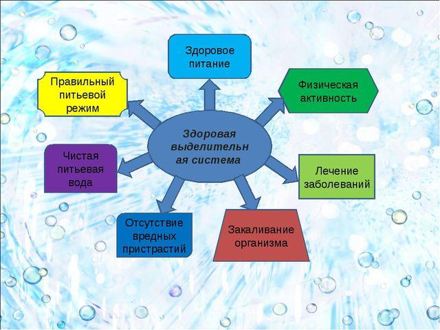 Здоровая выделительная система Здоровое питание Физическая активность Правиль...