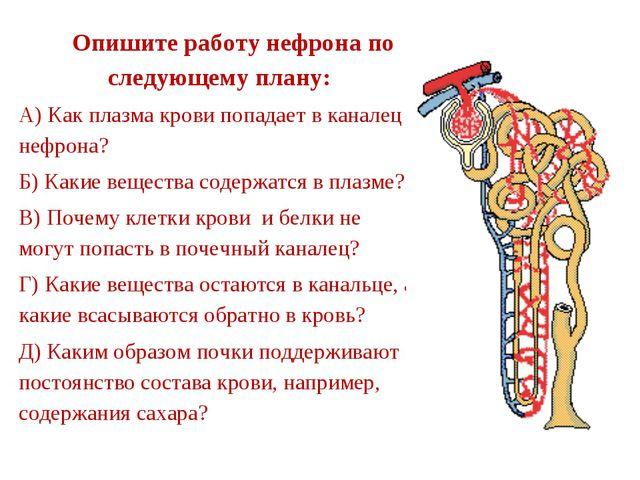 Опишите работу нефрона по следующему плану: А) Как плазма крови попадает в к...