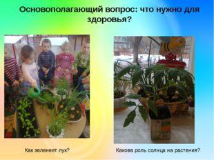 Основополагающий вопрос: что нужно для здоровья? Как зеленеет лук? Какова рол