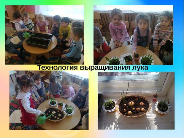 Технология выращивания лука