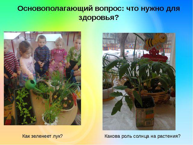 Основополагающий вопрос: что нужно для здоровья? Как зеленеет лук? Какова рол...