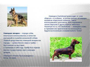 Немецкая овчарка—порода собак, изначально использовалась в качестве пастушь