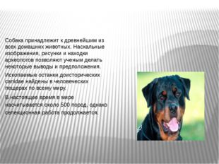 Собака принадлежит к древнейшим из всех домашних животных. Наскальные изображ