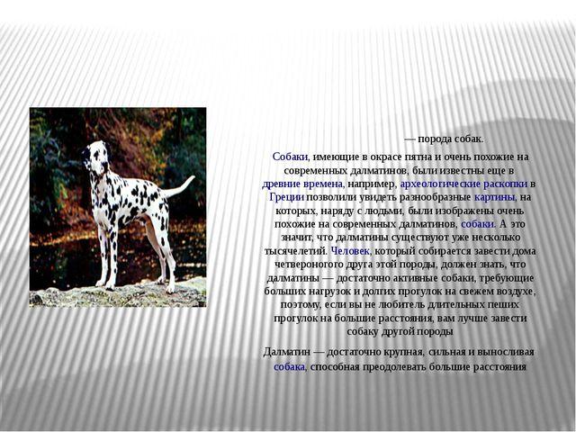 Далмати́н— порода собак. Собаки, имеющие в окрасе пятна и очень похожие н...