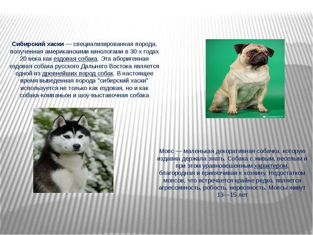 Сибирский хаски—специализированная порода, полученная американскими кинолог...