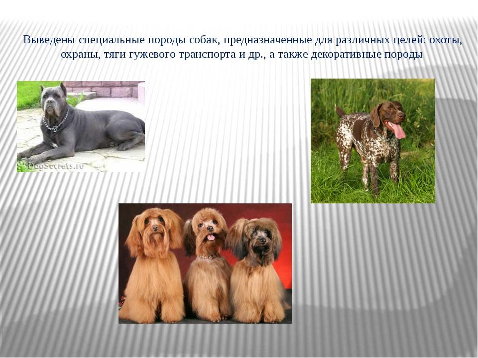 Выведены специальныепороды собак, предназначенные для различных целей:охоты...