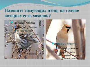 Назовите зимующих птиц, на голове которых есть хохолок? чечётка свиристель