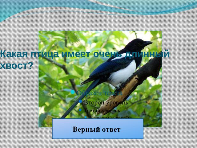 Какая птица имеет очень длинный хвост? Сорока Верный ответ