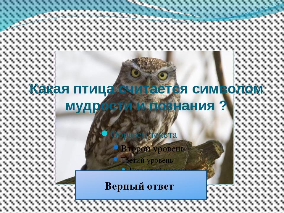 Сова Какая птица считается символом мудрости и познания ? Верный ответ