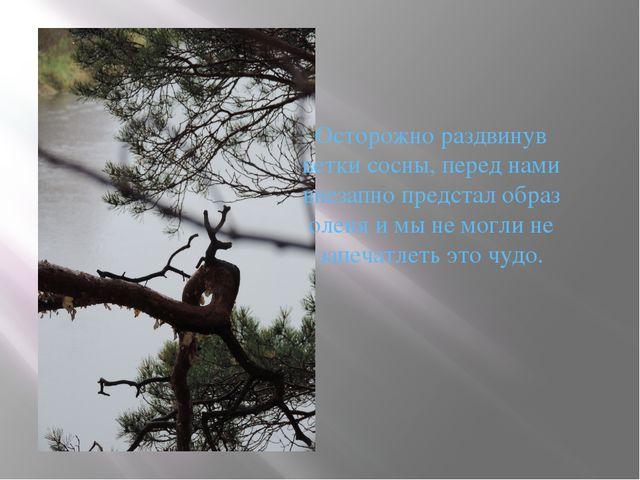 Осторожно раздвинув ветки сосны, перед нами внезапно предстал образ оленя и м...