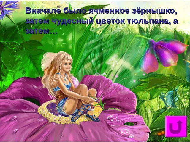 Вначале было ячменное зёрнышко, затем чудесный цветок тюльпана, а затем…