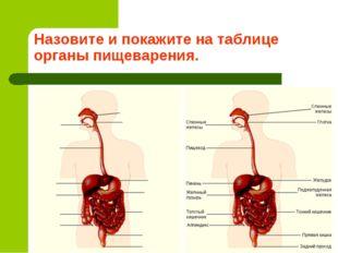 Назовите и покажите на таблице органы пищеварения.